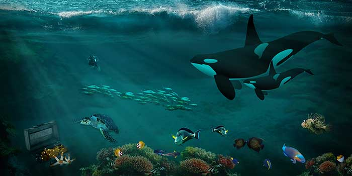 Das Ökosystem Meer