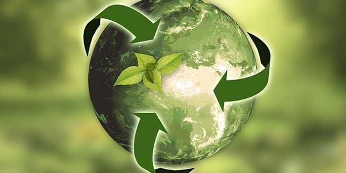 Die Grundlagen der Ökologie