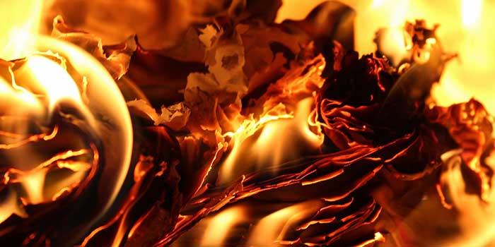 Ökologie unter Feuer - Die Trocknung des Virginia-Tabaks