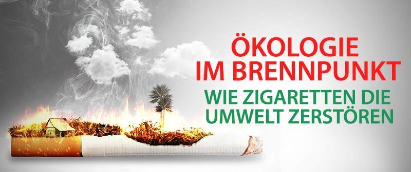 Ökologie im Brennpunkt – Wie Zigaretten die Umwelt zerstören
